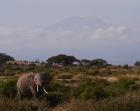 Elephant kindly posed for us in from of Kilimanjaro