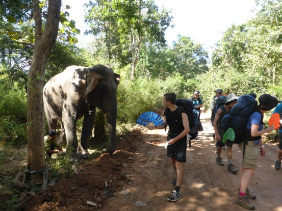 Elephants appearing out the jungle