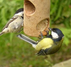 Bird Feeder at the Cottage